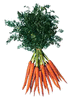 carrot bunch clip art