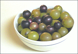 muscadines small