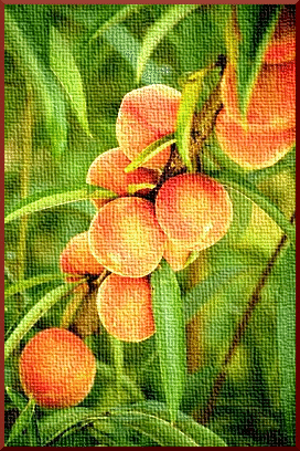 peach on canvas