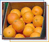 oranges in a box clip art