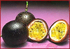 passion fruit clip art