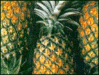 pineapple 2 clip art