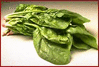 spinach 1 clip art