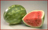 watermelon 1 clip art