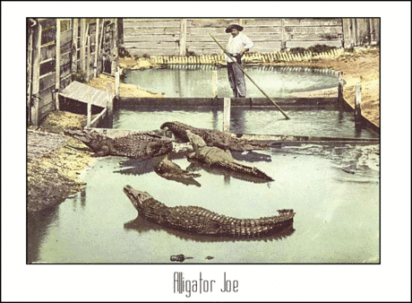 Postcard Alligator Joe