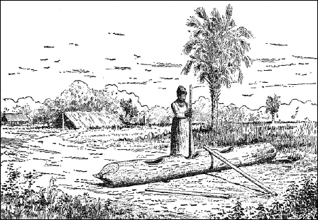 Seminole koonti log used to make flour