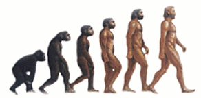 ape man evolution