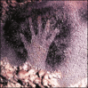 ancient cave handprint Dordogne France clip art