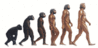 ape man evolution clip art