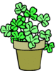 saint patricks day Shamrock Plant clip art