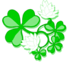 saint patricks day Shamrocks 2 clip art