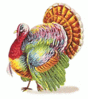 thanks giving turkey colorful clip art