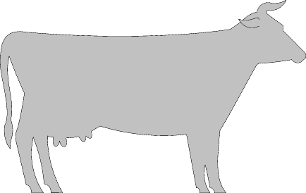 agriculture COW