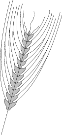 agriculture barley