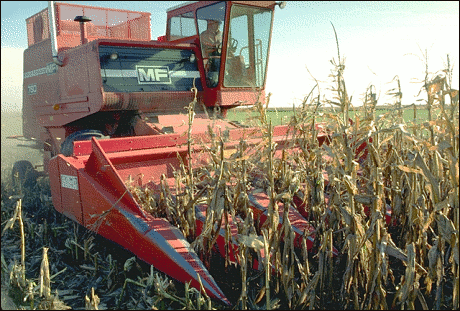 agriculture corn harvester