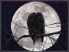 US military eagle perched in front of moon clip art