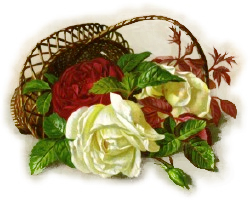 basket red white roses