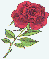 the rose