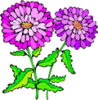 Asters 1 clip art