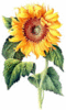 Sunflower 2 clip art