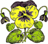 pansy drawing clip art