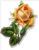 pink and yellow rose 1 clip art