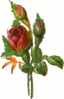 rose two buds clip art