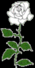 rose white on black clip art