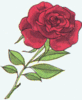 the rose clip art
