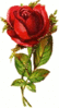upright rose clip art