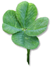 Clover four leaf clover picture clip art