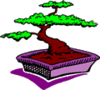 Bonsai Tree 3 clip art