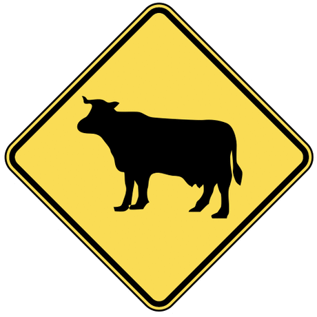 warning street sign cow crossing