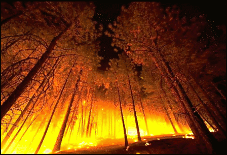 weather scene forest fire